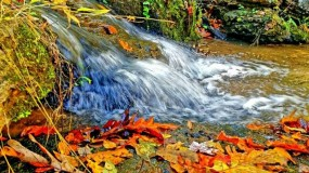 Fall_Water_Jenny_Marie